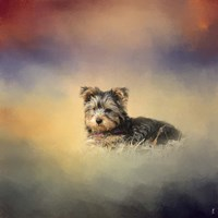 Yorkie Loving The Leaves Fine Art Print