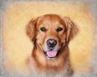 Young Golden Retriever Portrait Fine Art Print