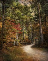 Autumn Forest 2 Fine Art Print