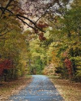 Autumn Passage 3 Framed Print