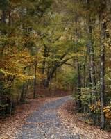Autumn Passage 5 Framed Print