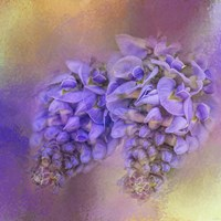 Enticing Wisteria Fine Art Print