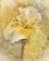 Splash Of Spring Fine Art Print