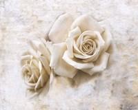 Vintage Rose 4 Framed Print