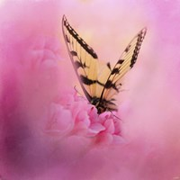 Butterfly On The Azaleas Fine Art Print