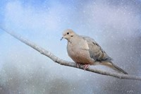 Dove In The Snow Fine Art Print
