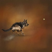 Gimme That Ball German Shepherd Fine Art Print