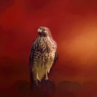 Hawk On A Hot Day Fine Art Print