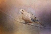 Mourning Dove On A Winter Evening Fine Art Print