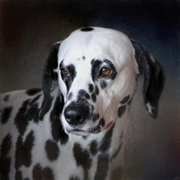 The Firemans Dog Dalmatian Fine Art Print