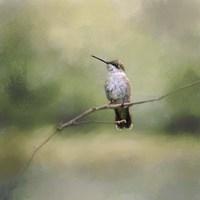 Tiny Visitor Hummingbird Fine Art Print