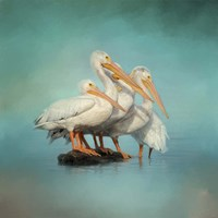 We Are Family White Pelicans Fine Art Print