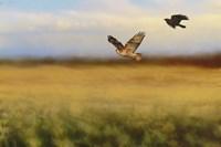 Hawk On The Run Fine Art Print