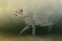 Cheetah On The Prowl Fine Art Print