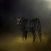 Black Angus Calf In The Moonlight Fine Art Print