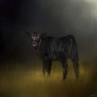 Black Angus Calf In The Moonlight Fine Art Print