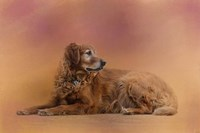 Golden Retriever In The Setting Sun Fine Art Print
