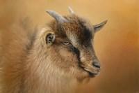 Portrait Of A Nubian Dwarf Goat Fine Art Print