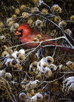 Cardinal & Thistles Fine Art Print
