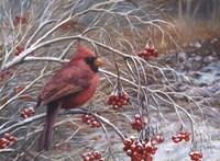 Cardinal and Berries Fine Art Print