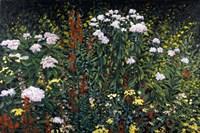 Wildflower Garden Fine Art Print