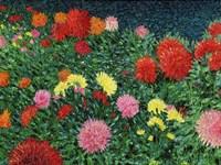 Summer Flowers Fine Art Print