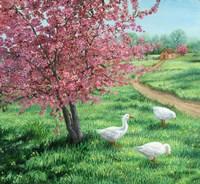 Cherry Blossom Time Fine Art Print