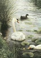 In The Pond Fine Art Print