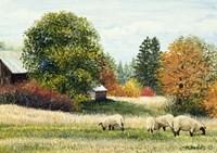 Autumn Colours Fine Art Print