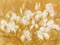 Irises II Framed Print