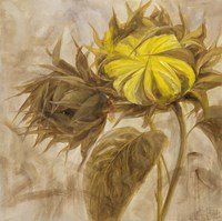 Sunflower II Fine Art Print