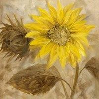 Sunflower III Fine Art Print