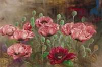 Poppies IV Framed Print