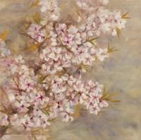 Cherry Blossom II Framed Print