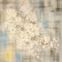 White Cherry Blossom III Framed Print