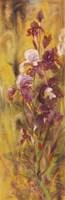 Bearded Iris IV Fine Art Print