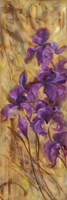 Bearded Iris VII Fine Art Print