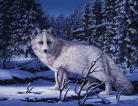 Blue Northern Fine Art Print