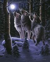 Midnight Clear Fine Art Print