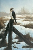 Hawk Eye Fine Art Print
