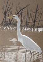 Great Egret Fine Art Print