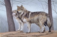 Two Wolves Fine Art Print