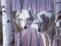 White Wolves By Birch Fine Art Print