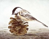 Black - Capped Chickadee Fine Art Print