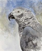 Bird - Head Study Fine Art Print