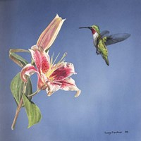 Hummingbird And Lily Fine Art Print