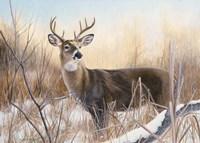 Big Buck Fine Art Print