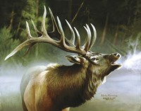 Elk In Mist Fine Art Print