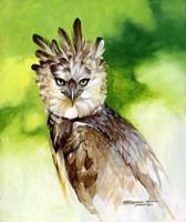 Harpy Eagle Fine Art Print