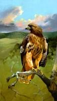 Hawkeye Fine Art Print